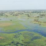 Delta de Okavango: um safari pelo reino dos animais selvagens