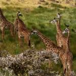 Tanzânia: a terra de aventuras, vida selvagem e natureza