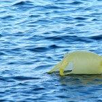 Mar: sabia que há cada vez mais plástico no mar?