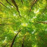 10 árvores que parecem ser de outro planeta