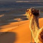 Marrocos: uma viagem ao deserto e ao mundo de sabores exóticos