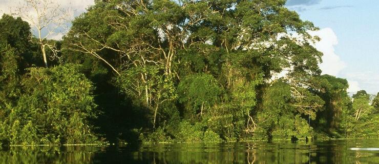 amazonia-dois