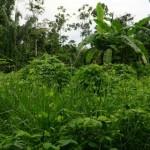 Há um povoado na Amazónia que vive de economia de troca