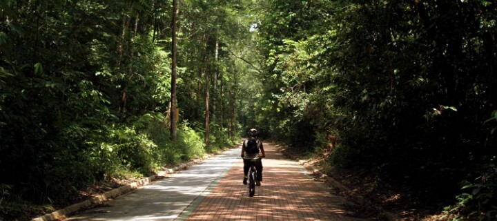 Floresta Amazónia