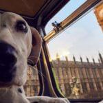 Autocarro canino: roteiro especial para cães e donos em Londres