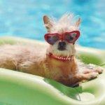 9 dicas para viajar com animais e ter umas férias divertidas