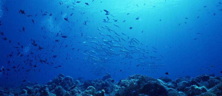 eletricidade submarina