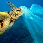 Zalerion maritimum: um fungo para combater a poluição do Mar