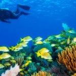 Recifes de Coral em Cuba investigados por equipa cubana e norte-americana
