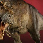 Dinossauro T-Rex afinal não era assim tão rápido como pensávamos